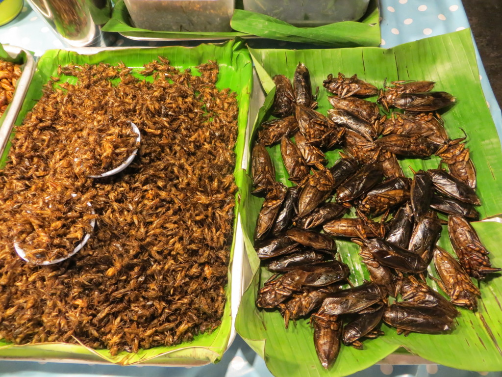 Eating bugs in Phuket Thailand