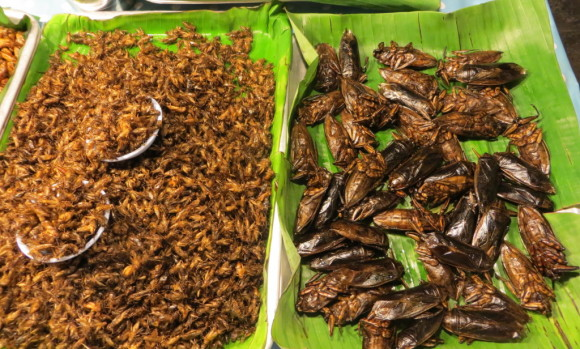 Eating bugs: A story of fear, foolishness and triumph